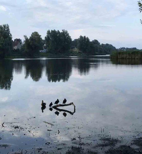gentofte sø